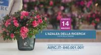 Torna l'Azalea della Ricerca a Bagno a Ripoli